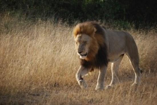 Top 3 destinations idéales en Afrique pour passer les vacances