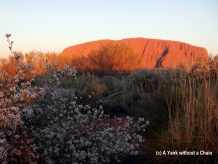 Uluru at sunset with flowers