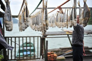 Ho hangs the fish with equal space between each one so as to make it get dry evenly. His boat is moored right next to the balcony of his stilt house.