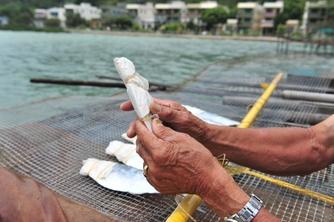 Instead of ripping the fish stomach open, to take out its viscera, Ho says cleaning it from its gills is the traditional Tai O way of making salted fish. He wraps the fish head carefully in order to protect it from bacteria, since bacteria can easily thrive in gills and fish eyes.