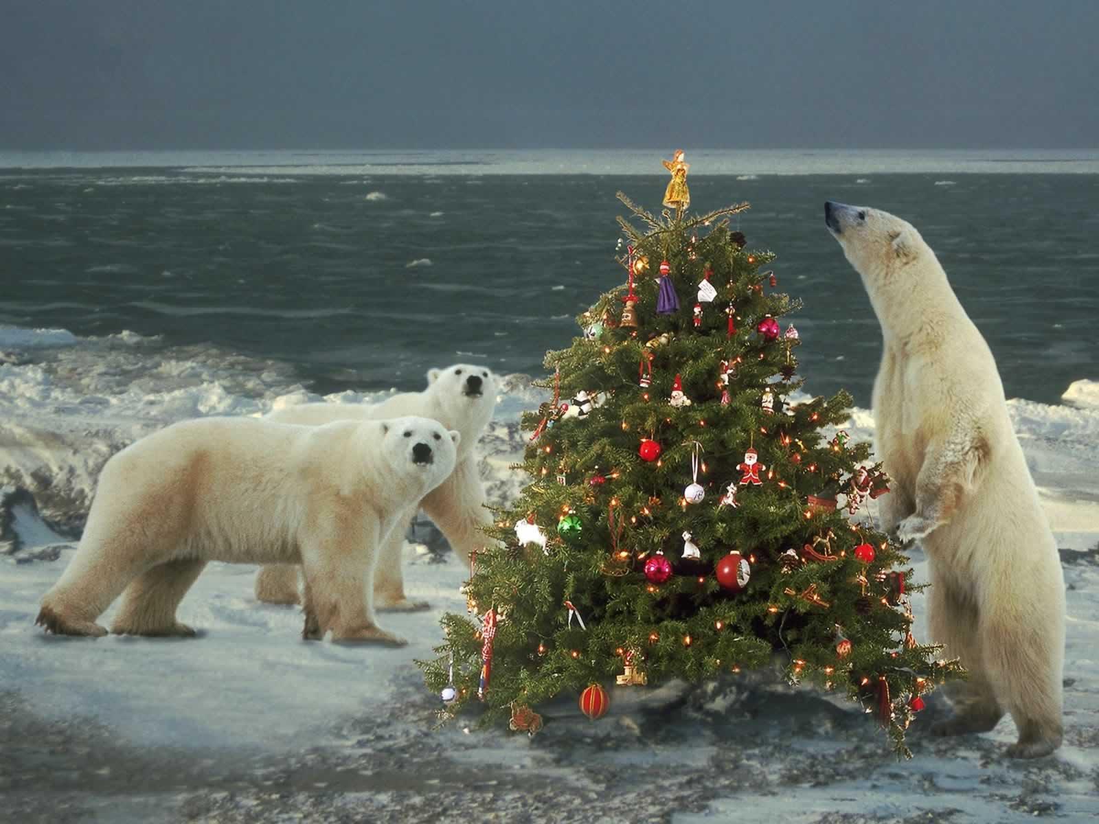 Funny Wallpaper Christmas Animal
