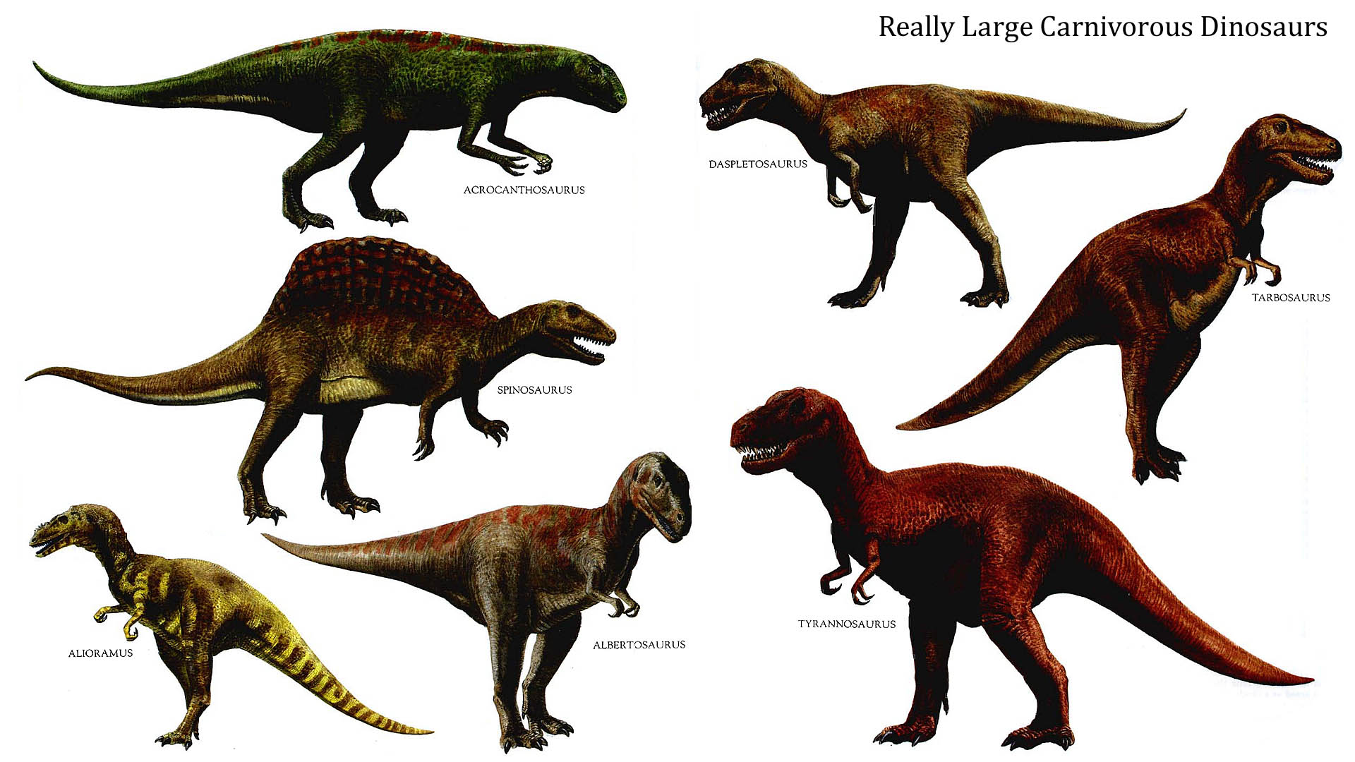 Plant Eating Dinosaurs Names