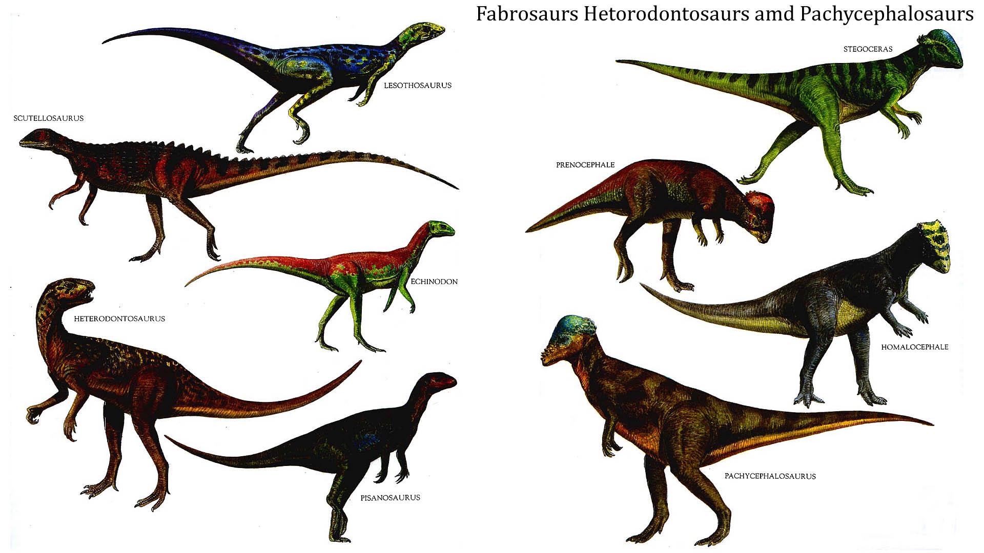 Fabrosaurs Hetorodontosaurs And Pachycephalosaurs