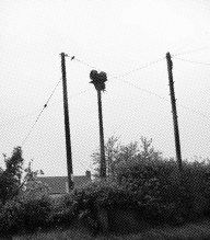 Air raid sirens-A Year In The Country-14
