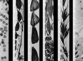 mothlight-1963-001-still-brakhage
