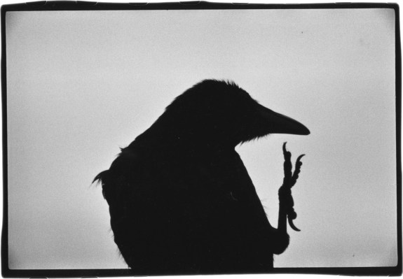 Masahisa Fukase-The Solitude Of Ravens-A Year In The Country-b