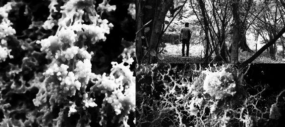 The Creeping Garden-film-documentary-2