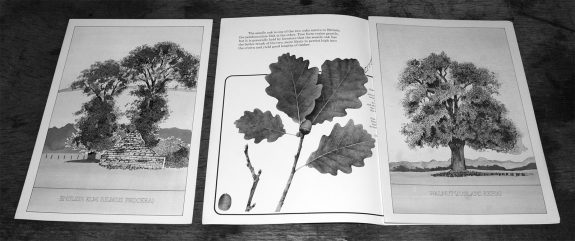 Plant a tree in 73-campaign-leaflet-bowaters guide to Britains most common trees-2