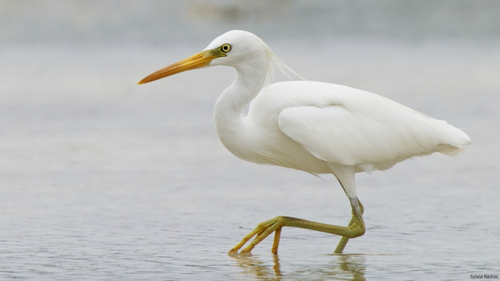 NCR's 'last bird sanctuary' near Manila bay
