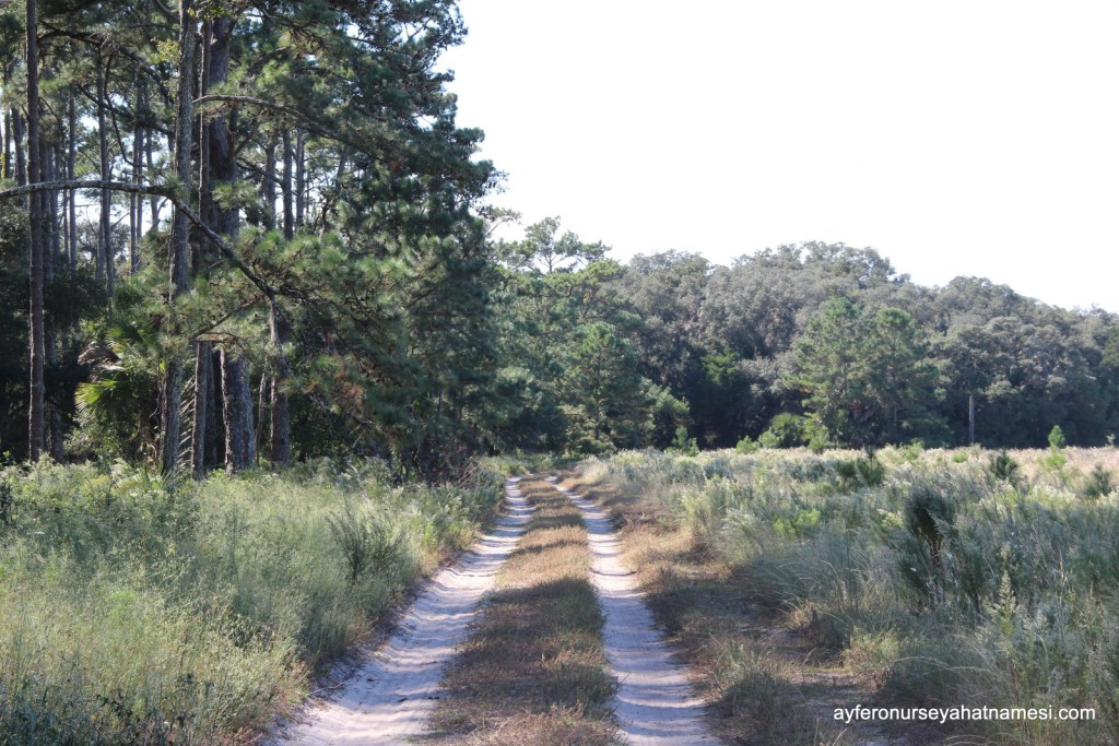Bisiklet kullanılmasına izin verilen ana yol - Cumberland Adası