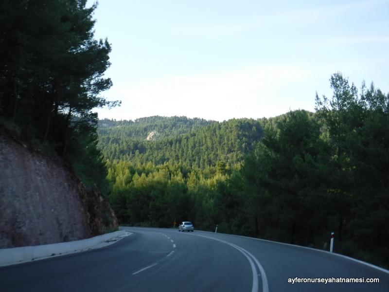 Çam Ormanları - Evia Adası