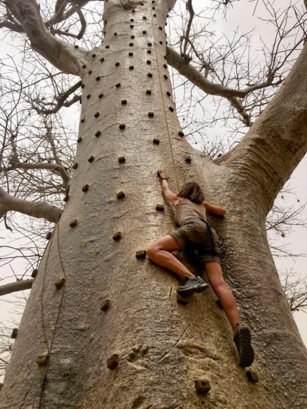 Baobablar
