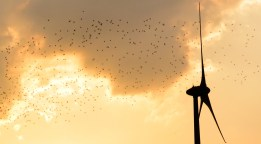 Essein d'oiseaux