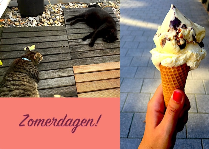 Zomerdagen ijsje gesmolten katten
