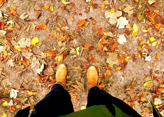 Herfstwandeling in het bos