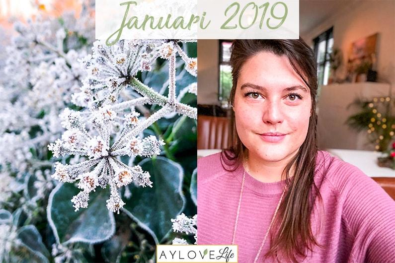 Maandoverzicht januari 2019