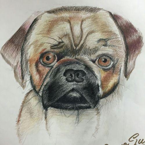 AYLUS_Art_Dog