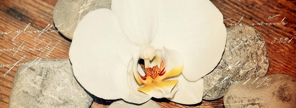 Slider Orchidee mit Holz