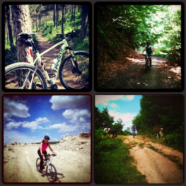 collage_arazi_bisikleti_0