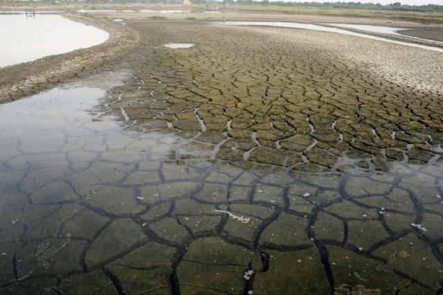 Tanahnya pecah-pecah. Merongkah. Tanda lama tak bersua air laut. Di beberapa bagian tergenang air hujan.