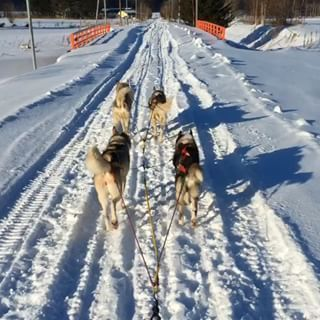 Dogsled di Hokkaido. Foto : insparazzi.com