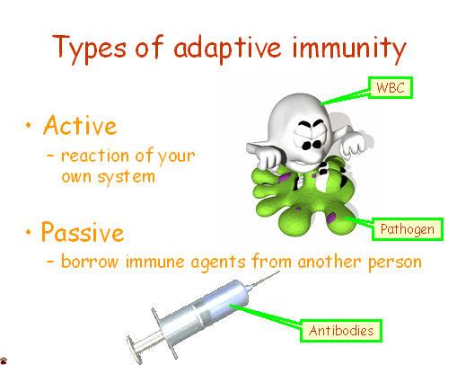 Immune system and Ayurveda