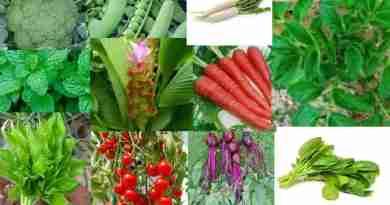 15 type vegitable grow with less sunlight