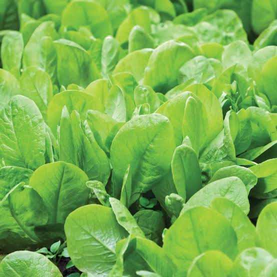 summer vegetable list to grow in feb to april