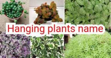 27 Hanging plants name