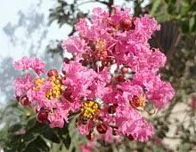 21 permanent flowering plants (2)