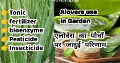 alovera use in garden