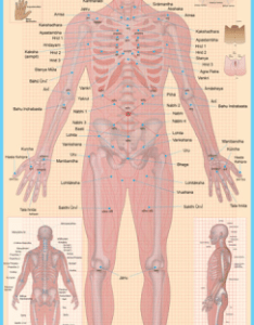 Marma poster also charts and posters ayurveda rh ayurvedaposters