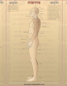 Marma charts also ayurveda posters rh ayurvedaposters