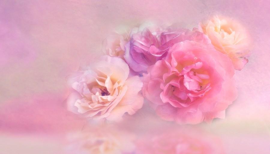 Wellness Malente – Aroma, Massagen & Ayurveda