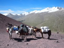Horses Taking A Rest At the Top