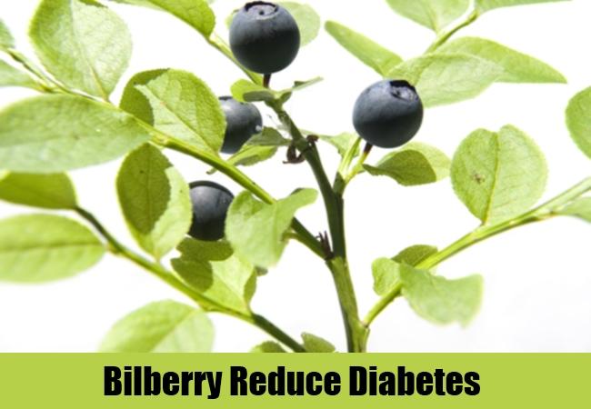 Bilberry Reduce Diabetes