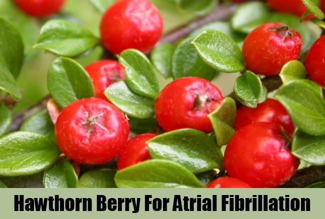 Hawthorn Berry For Atrial Fibrillation