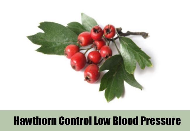 Hawthorn Control Low Blood Pressure