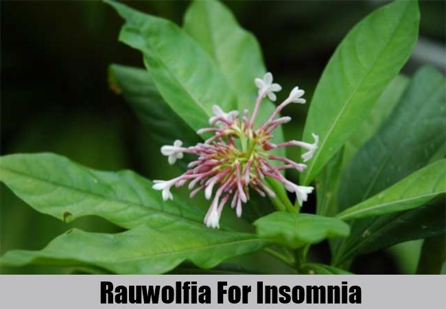 Rauwolfia For Insomnia