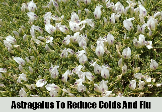 Astragalus To Reduce Colds And Flu