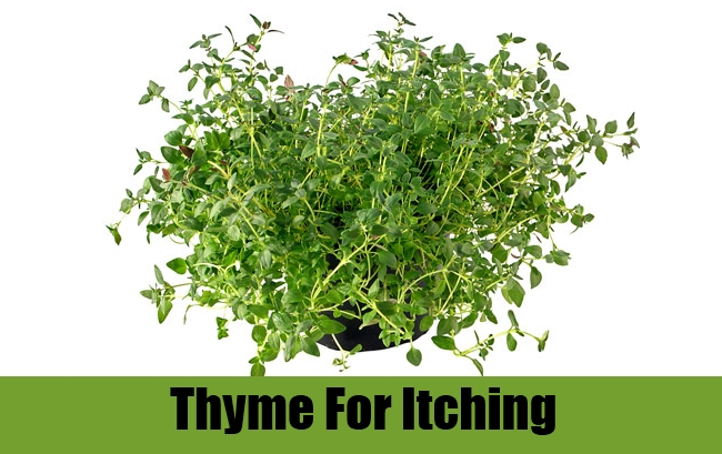 Thyme For Itching