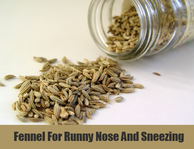 Fennel For Runny Nose And Sneezing