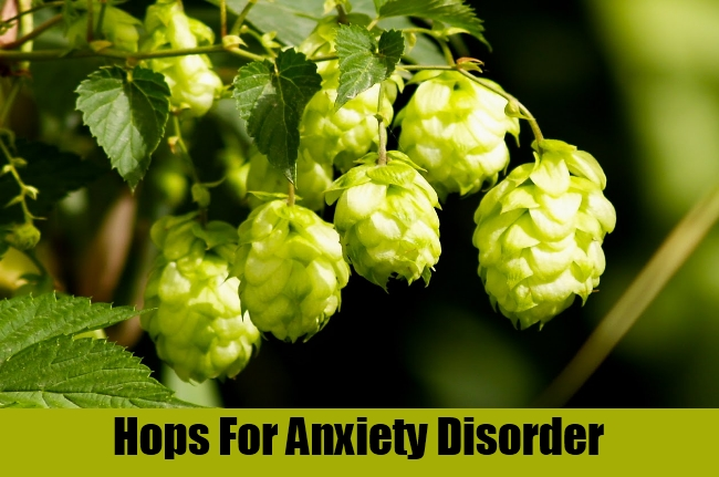 Hops For Anxiety Disorder