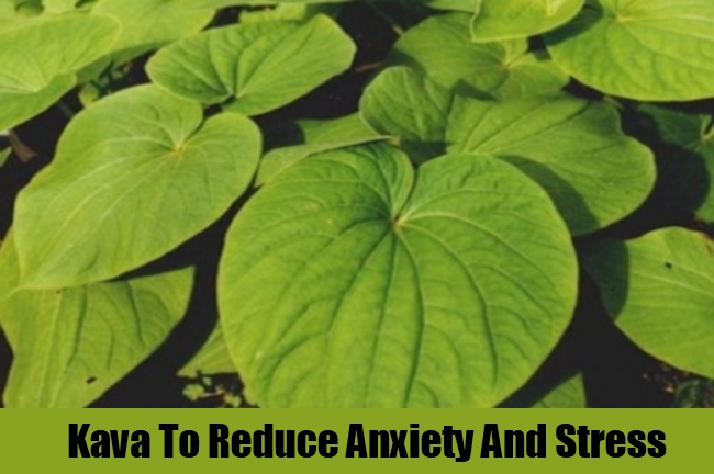 Kava To Reduce Anxiety And Stress