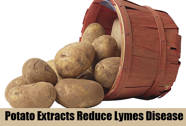 Potato Extracts Reduce Lymes Disease