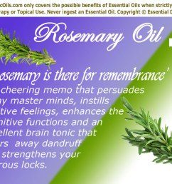f ted for its memory enhancing power and anti depressant properties rosemary herb and its  [ 1000 x 800 Pixel ]