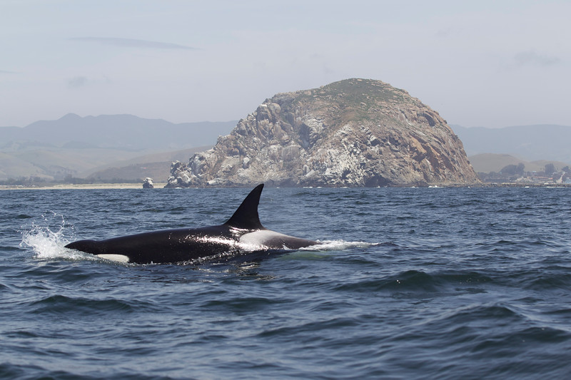 Whale Watching In Shell Beach Ca