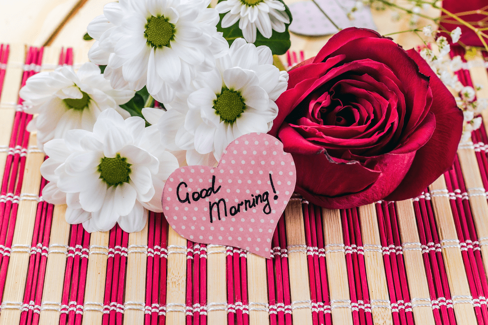 100 good morning flowers