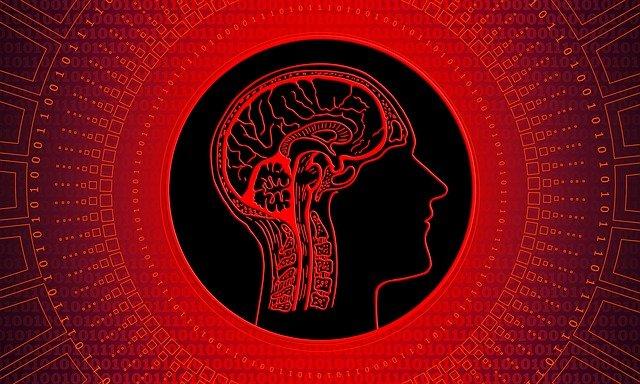 Fonctionnement de notre cerveau