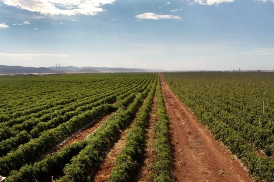 Resultado de imagen para agricultura monterrey
